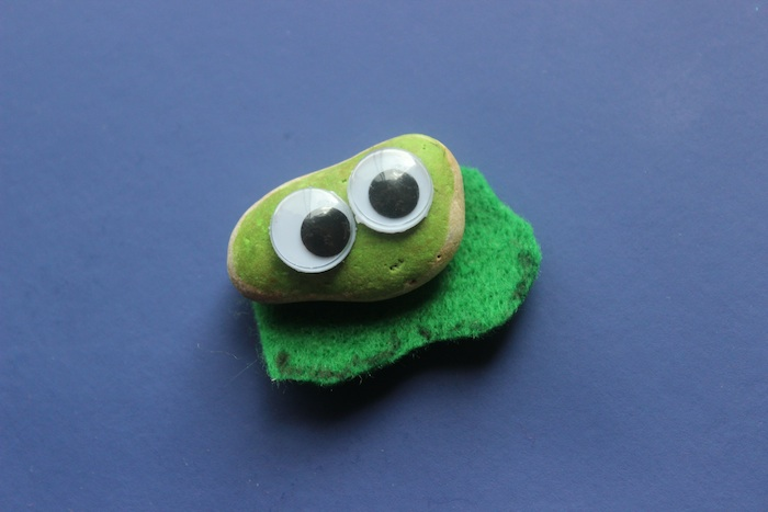 cute little pet rock frog