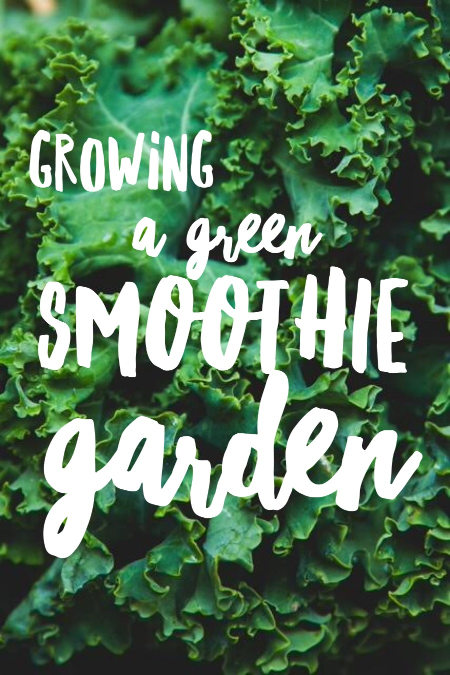 Planting a green smoothie garden is a great way to get started healthier eating habits